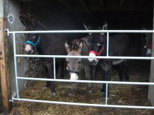 donkey rescue charity dordogne